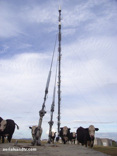 The cows and Ridgehill TV transmitter